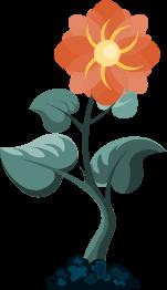 L'expert ou  'la plante mature'